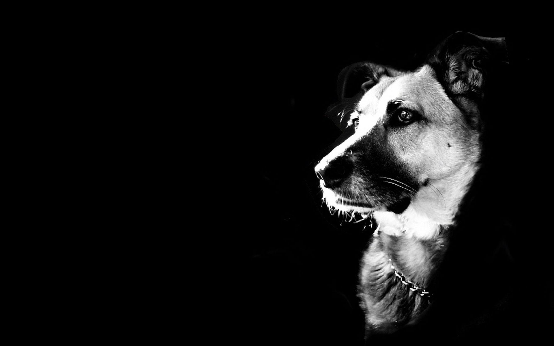 tr s bonne photo en noir et blanc propre du chien sp cial. Black Bedroom Furniture Sets. Home Design Ideas